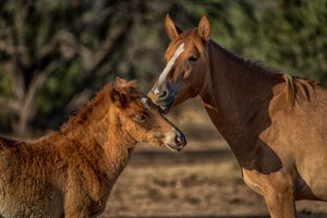 Mare horses kissing foal art by Rob's Wildlife