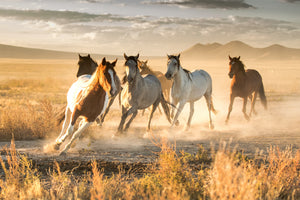 Rustic wild horse photography print