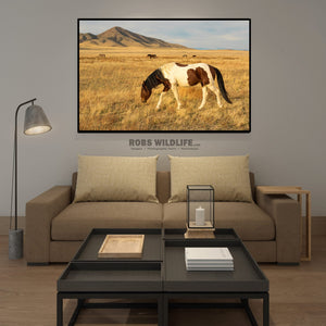 Brown and White Paint Horse Photography, Wild Horse Art by Rob's Wildlife