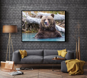 Coastal Brown Bear Close up photography print