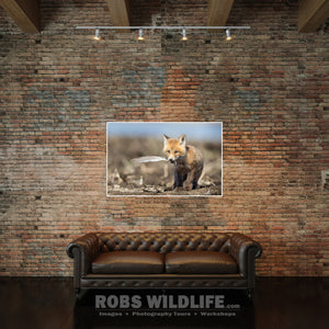 Woodland Animal, Wildlife Wall Art on brick wall