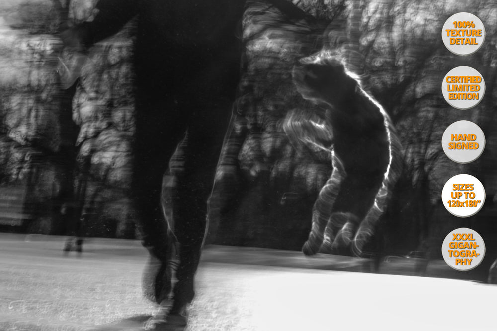 Jumping Dog, Central Park Avenue, New York. | 50% Detail.