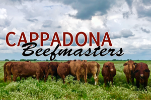 The History of Cappadona Beefmasters