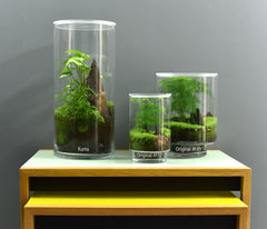 KIT DE RENOVATION TERRARIUM ORIGINAL #12