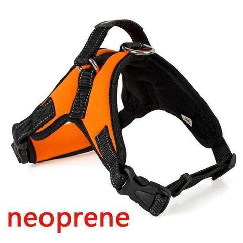 Harnais de sécurité - Orange Neoprene / S - Lovely bouledogue