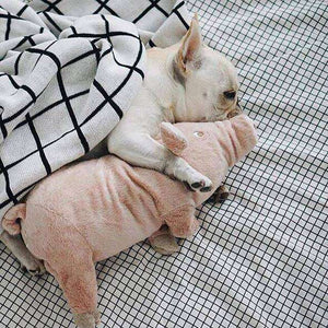 Peluche cochon -  - Lovely bouledogue