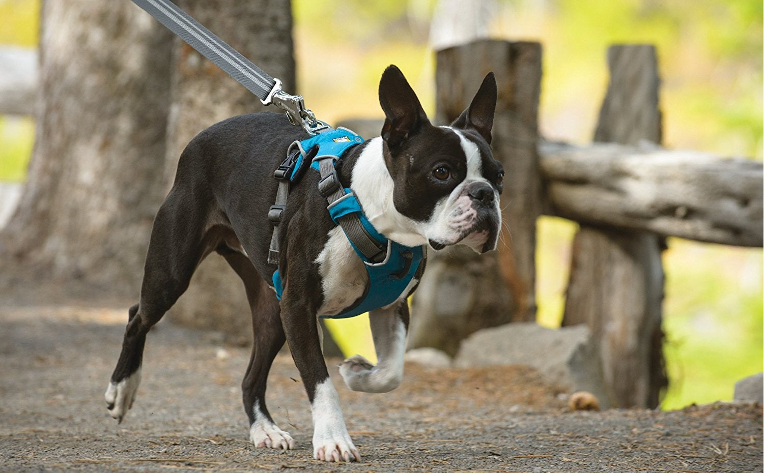 Dog Harnesses | Leashes & Collars too!