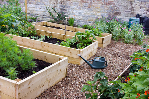 Home Garden & Allotment