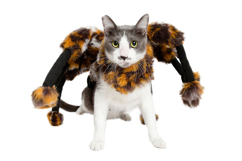 Adorable Lion Mane Cat Costume