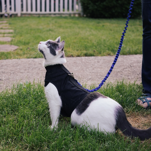 white and black cat outside on leash