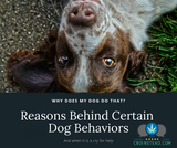 Why Does My Dog Do That? Reasons Behind Certain Dog Behaviors