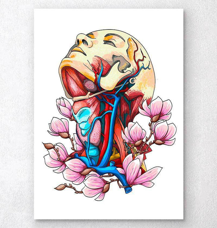 Head, neck and arteries art print