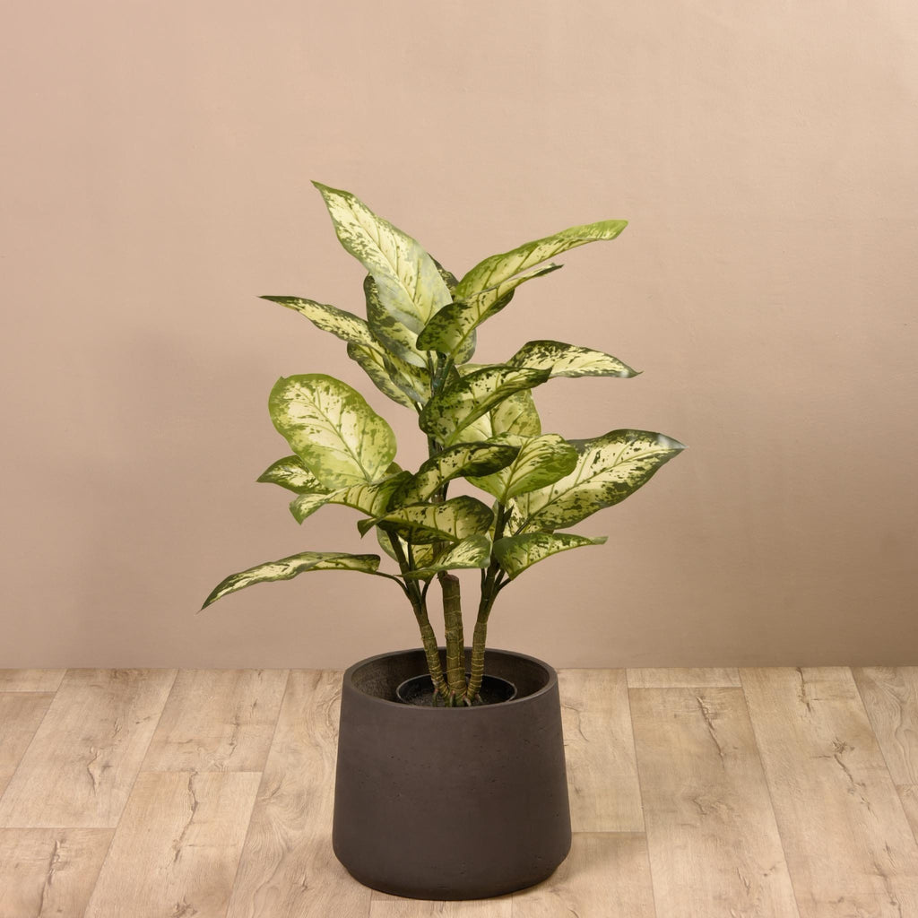 Diffenbachia Plant Bloomr Home Artificial Flowers and Trees