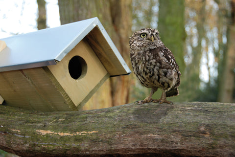 Little Owl Box FSC 100%