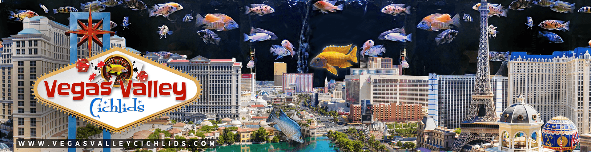 Vegas Valley Cichlids