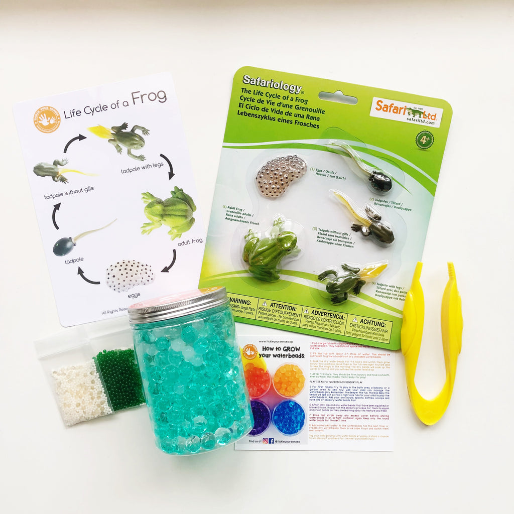 Frog Life Cycle Learning Kit