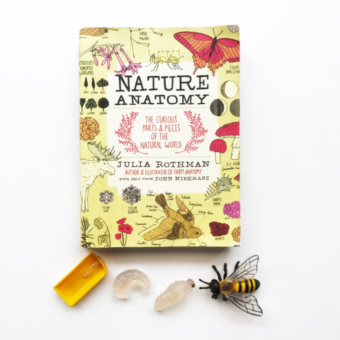 """Nature Anatomy"" by Julia Rothman"