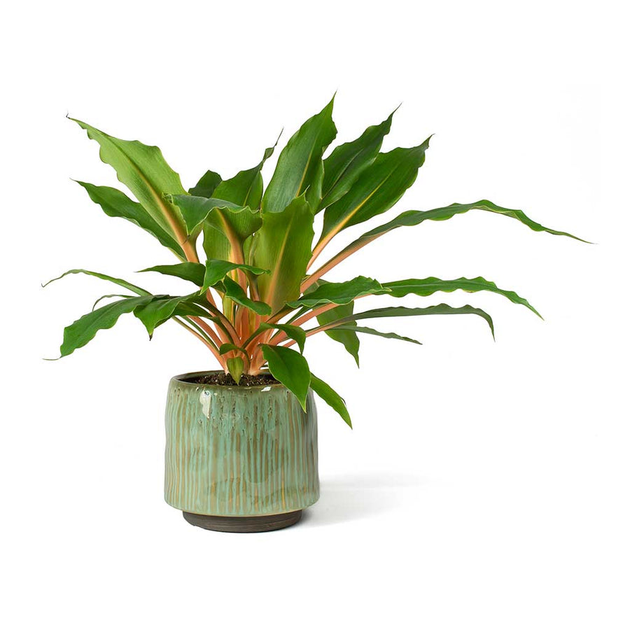 Senne Plant Pot - Ice Green - Small