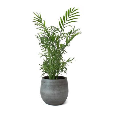 Esra Plant Pot - Mystic Grey & Parlour Palm