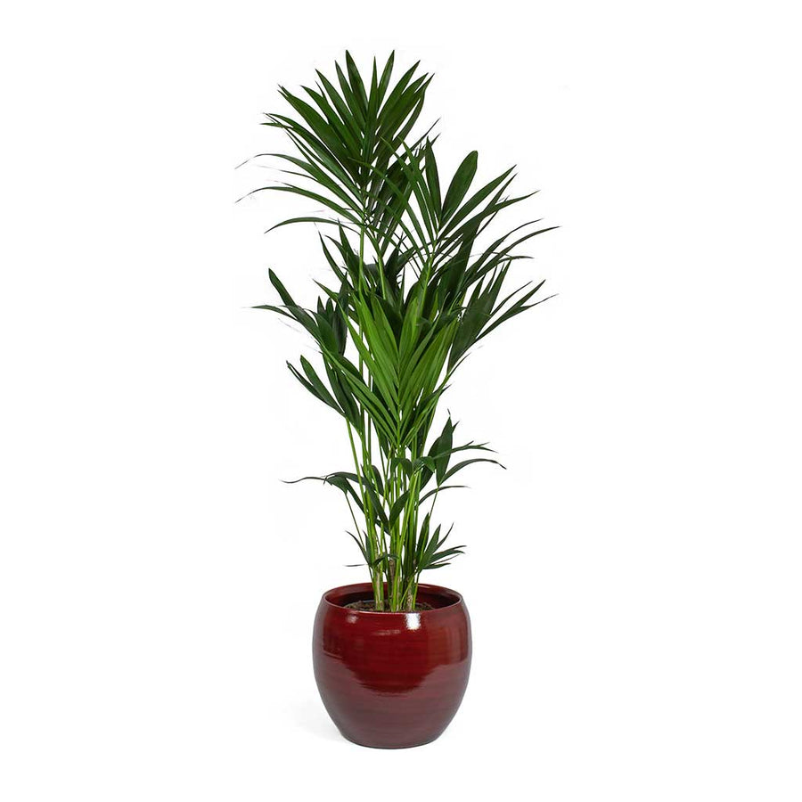 Cresta Plant Pot - Deep Red 28cm, 33cm, 37cm