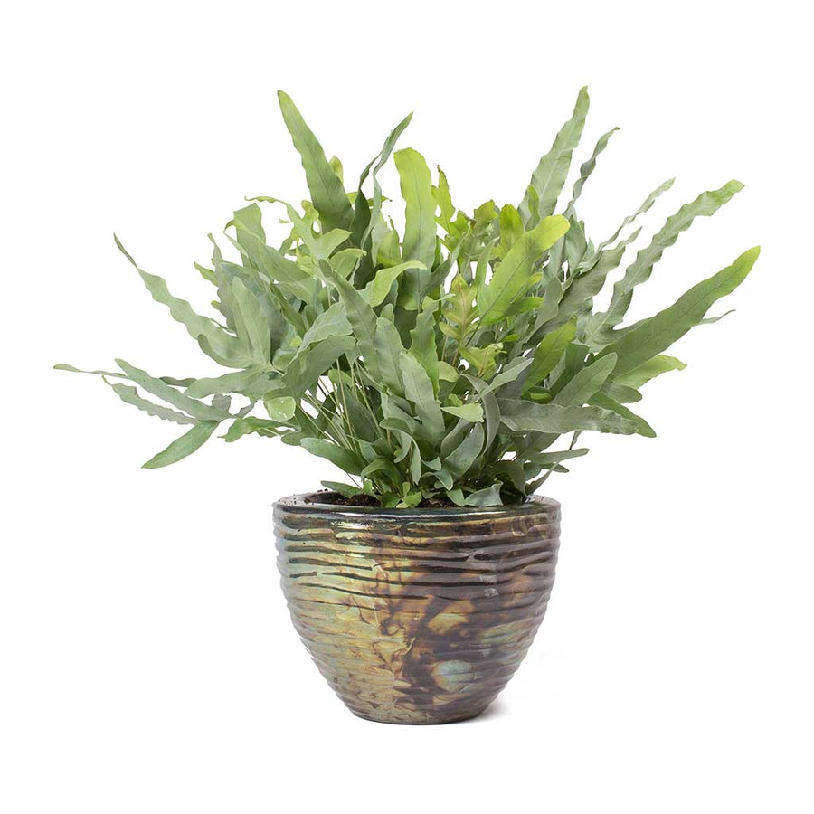 Livin' Beauty Plant Vase - Black Silver Waves 25cm