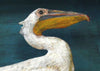 Paper Taxidermy | Pelican