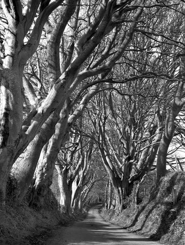 DARK HEDGES AT COUNTY DOWN                                                    Alain Le Garsmeur