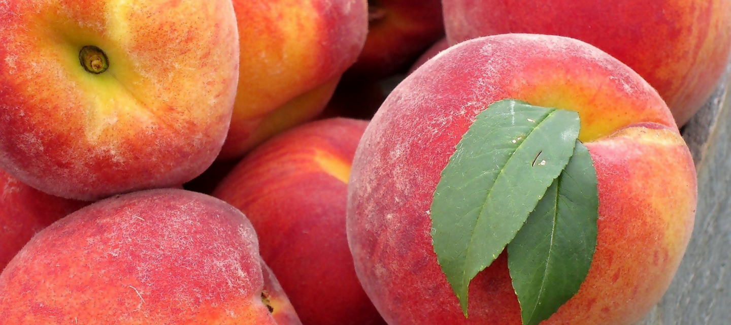 FruitShare-organic peaches-colorado peaches-colorado-peaches