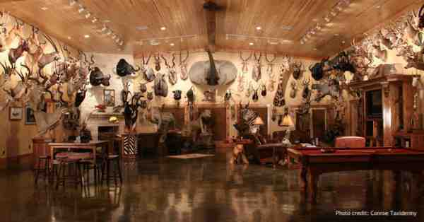 Taxidermy Decor is More Popular Than Ever!
