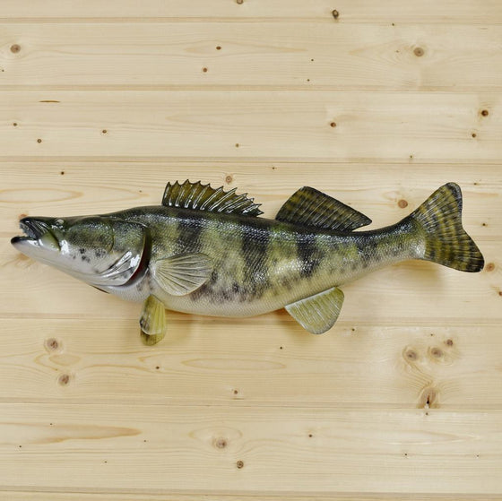 Walleye Taxidermy Mount