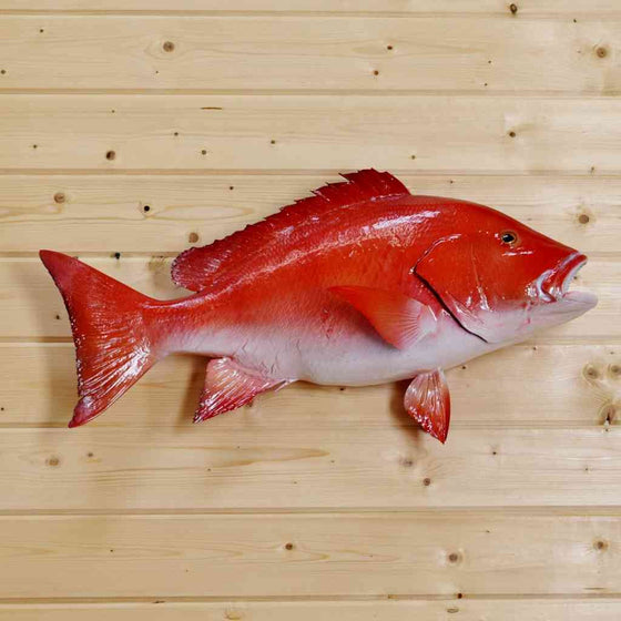 Rockfish Taxidermy Mount