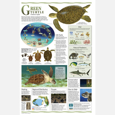 This beautiful poster provides information about the green turtle.
