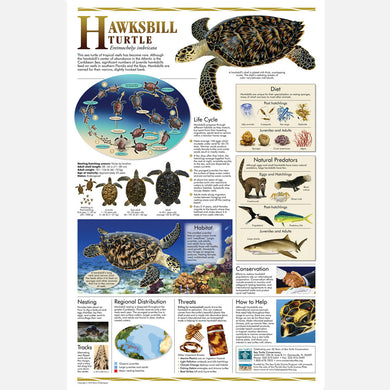 This beautiful poster provides information about the hawksbill sea turtle.