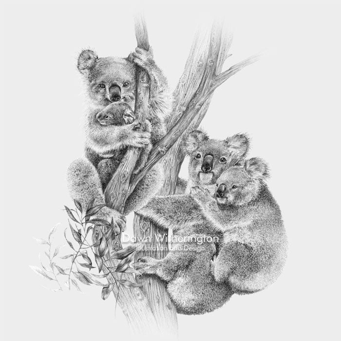 This lovely pencil drawing of a family of koala bears, Phascolarctos cinereus, is beautifully detailed.