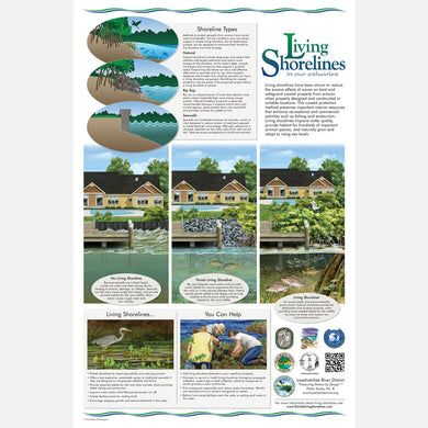 This beautiful poster provides information on the importance of living shorelines.