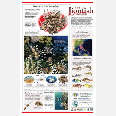 This beautiful poster provides information about the invasive red lionfish, Pterois volitans.