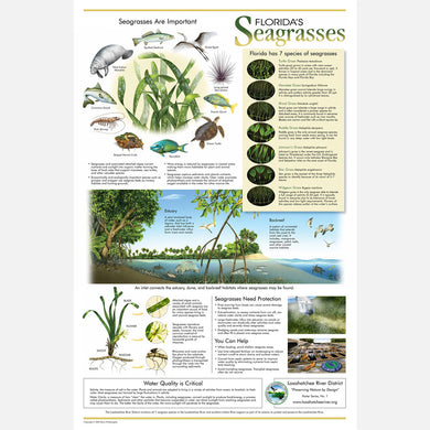 This beautiful poster provides information about the importance of Florida's seven species of seagrasses.