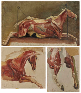 ALBERT LUGARDON - Three Studies of Skinned Horses - appleboutique-com