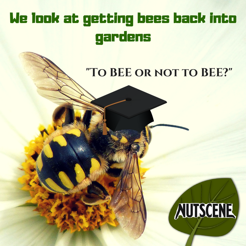To BEE or not to BEE? Nutscene look at getting bees back into UK gardens!