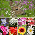 Deer Resistant Wildflower Mixture
