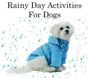 Rainy Day Activities For Dogs 2019