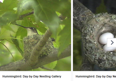 day-to-day-nestling-gallery