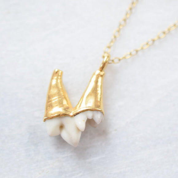 REAL FOX MOLAR TOOTH NECKLACE IN FINE GOLD