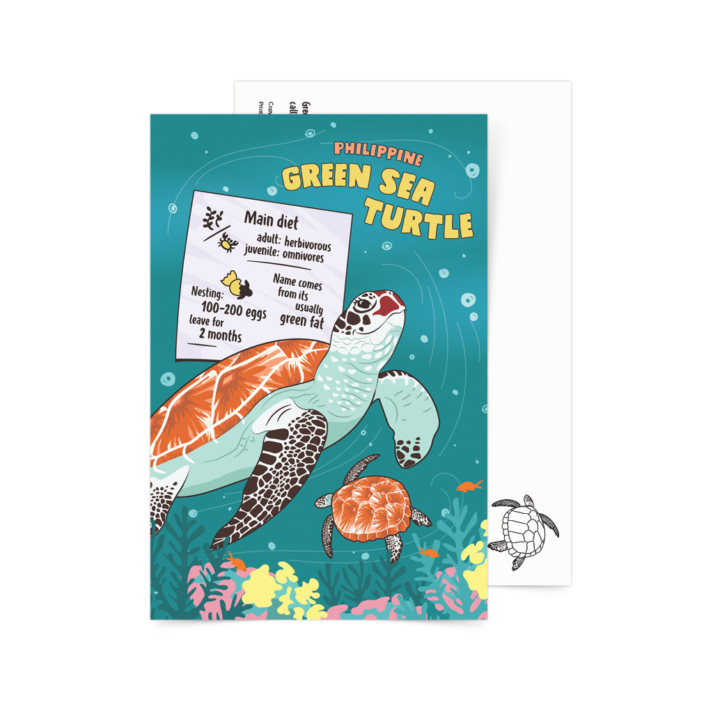 Facts About Philippine Green Sea Turtle Postcard Philippines gift