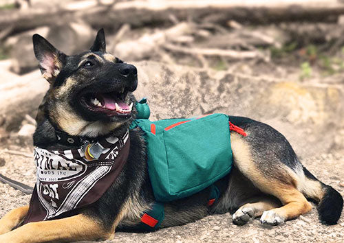 9 Tips For Backpacking With Your Dog