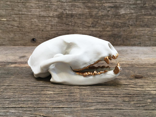 Porcelain Raccoon Skull