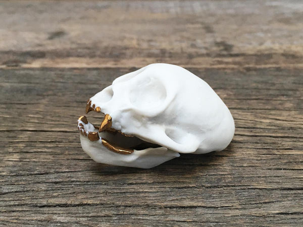 Porcelain Squirrel Monkey Skull