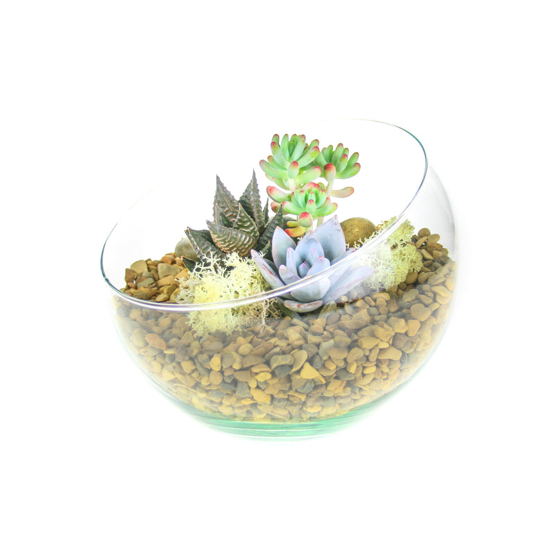 Glass Terrarium with Plants