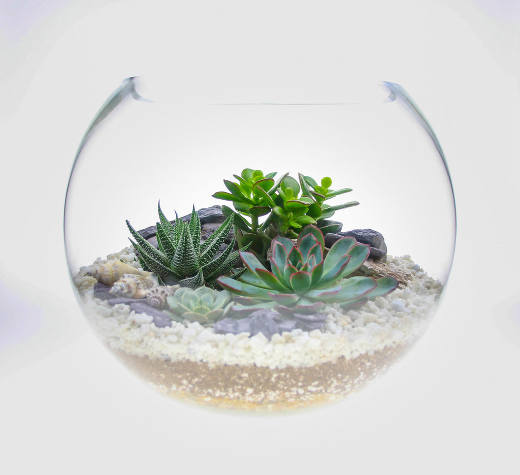 Home accessory terrarium kit