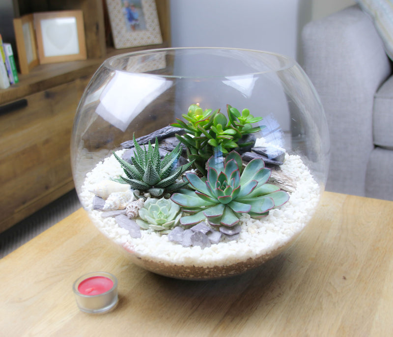 Extra Large Terrarium Kit